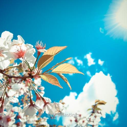 BH_Botanic_G_20111016_12