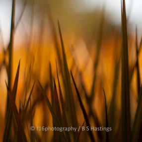BH_Web_Abstractions-2