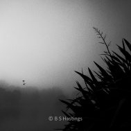 BH_WesternSprings_20120526_26