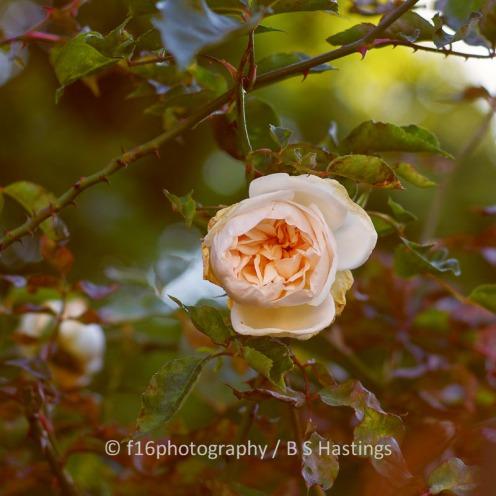 BH_Highwic_Garden_20130507_112
