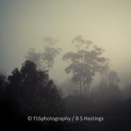 BH_WesternSprings_20120526_59