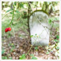 f16photography_S-S-Cemetery-1
