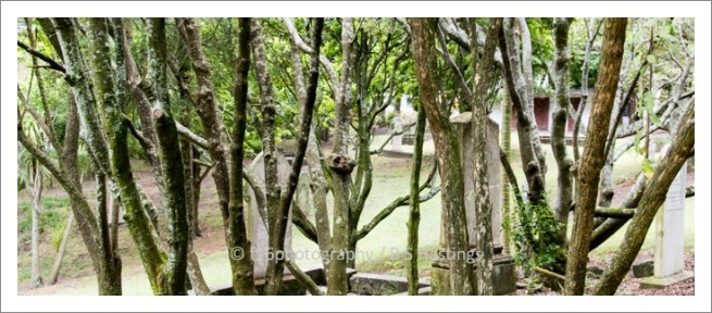 f16photography_S-S-Cemetery-15