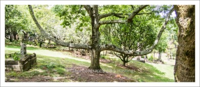 f16photography_S-S-Cemetery-5