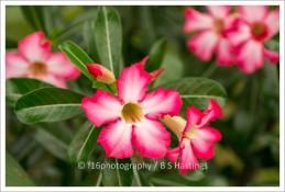 f16photography_NZHPT_PFair-79