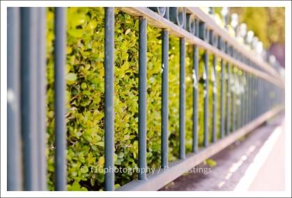 BH_Auck_City_20111006_11