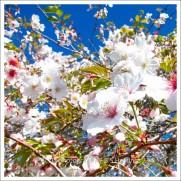 BH_Botanic_G_20111016_11