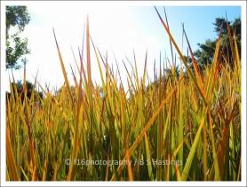 BH_Botanic_G_20111016_18