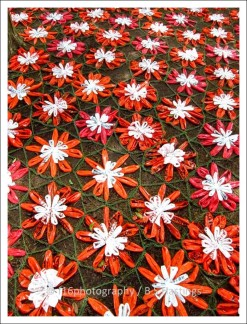 BH_Botanic_G_20111016_49