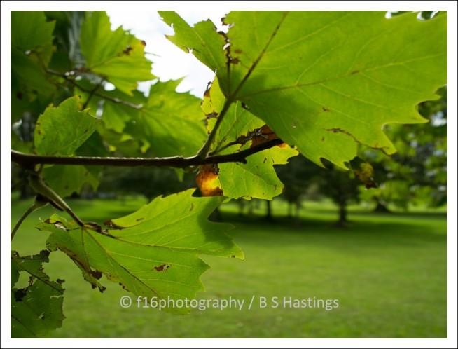 BH_Cornwall_Park_20120310_54