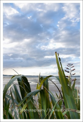 BH_Pt_Chev_Beach_20111220_6