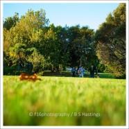 BH_Western_Springs_20120408_24