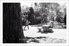 BH_Western_Springs_20130321_7
