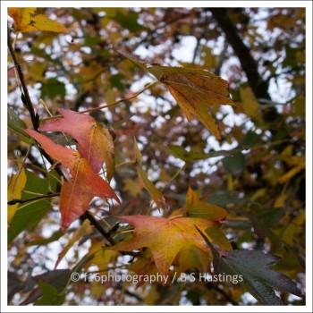 BH_WesternSprings_20120526_63